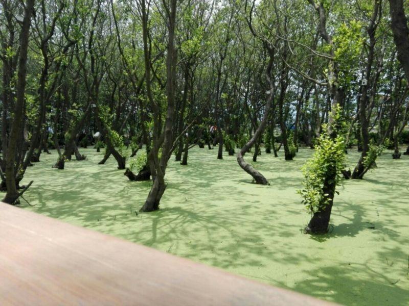 Bridge of Bandar-e Anzali Bird Paradise Park (1).jpeg