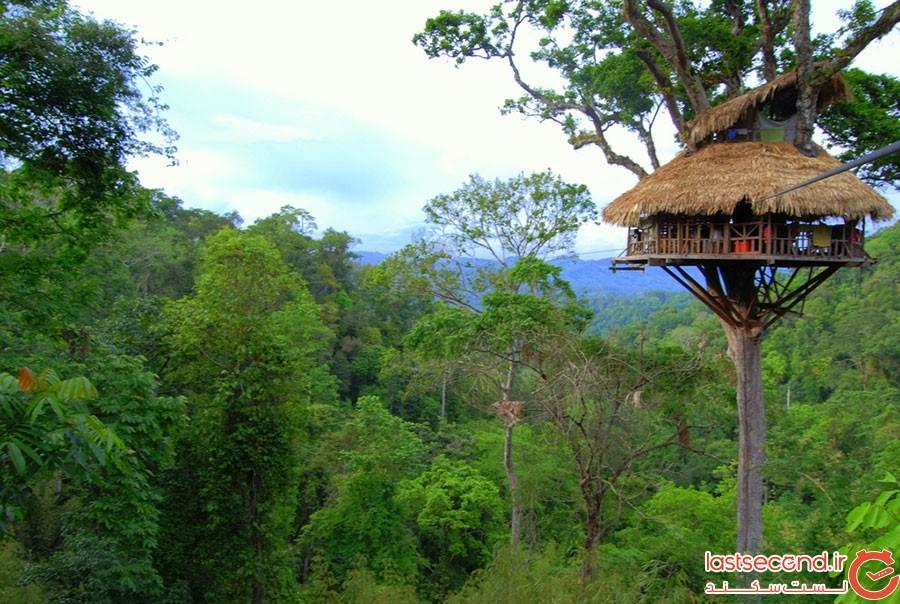 بلندترین خانه درختی دنیا کجاست؟