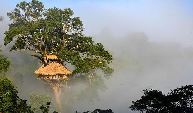 بلندترین خانه های درختی در لائوس