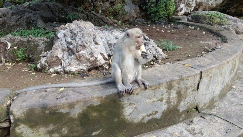 غار میمون