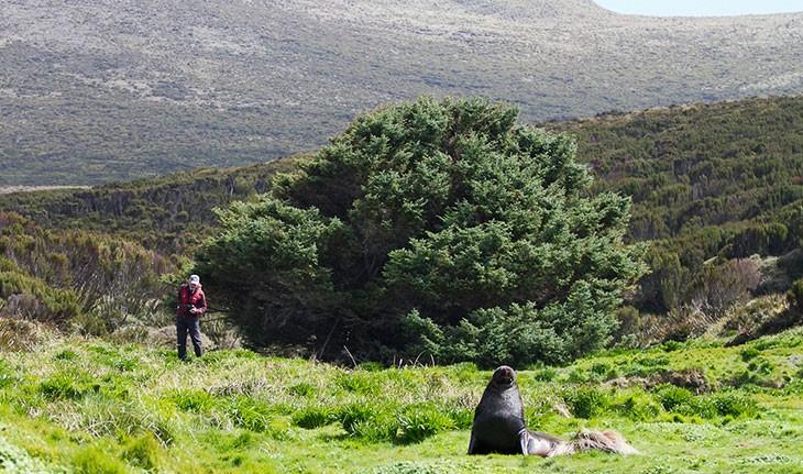 چرا این درخت، تنهاترین درخت جهان است؟