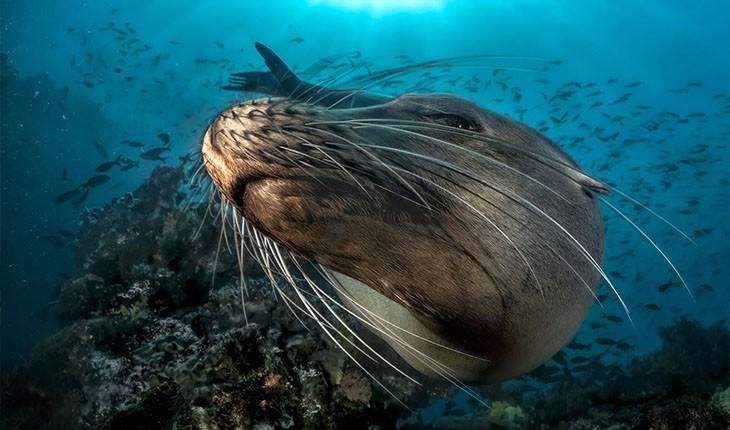 برندگان مسابقه عکاسی از زیر آب اقیانوس 2018 مشخص شدند