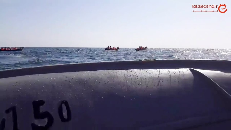 تماشای دلفین های زیبای جزیره هنگام