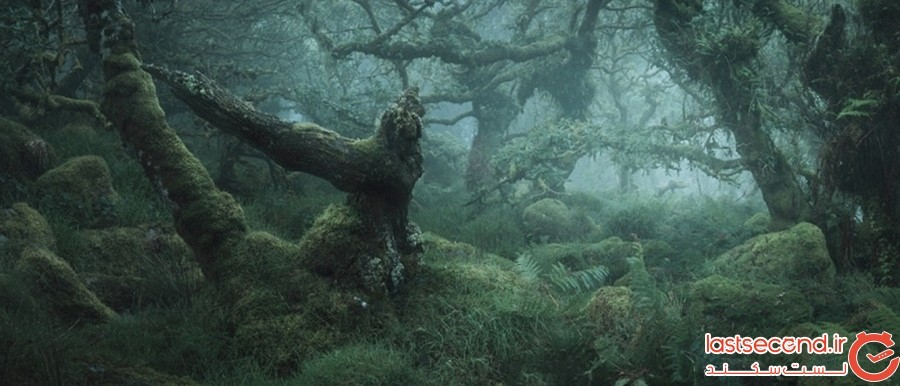 جنگل انگلیسی ویستمنز وُود