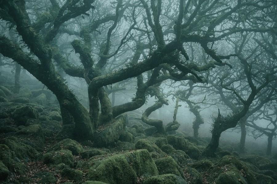 تصاویر سحرآمیز از جنگل انگلیسی و دلربای ویستمنز وُود