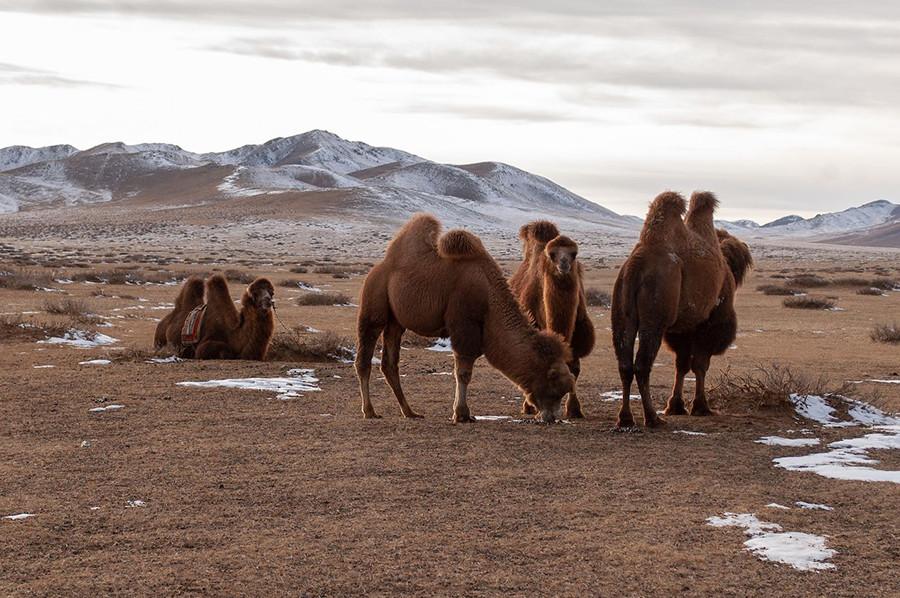 مغولستان را چگونه ببینیم؟