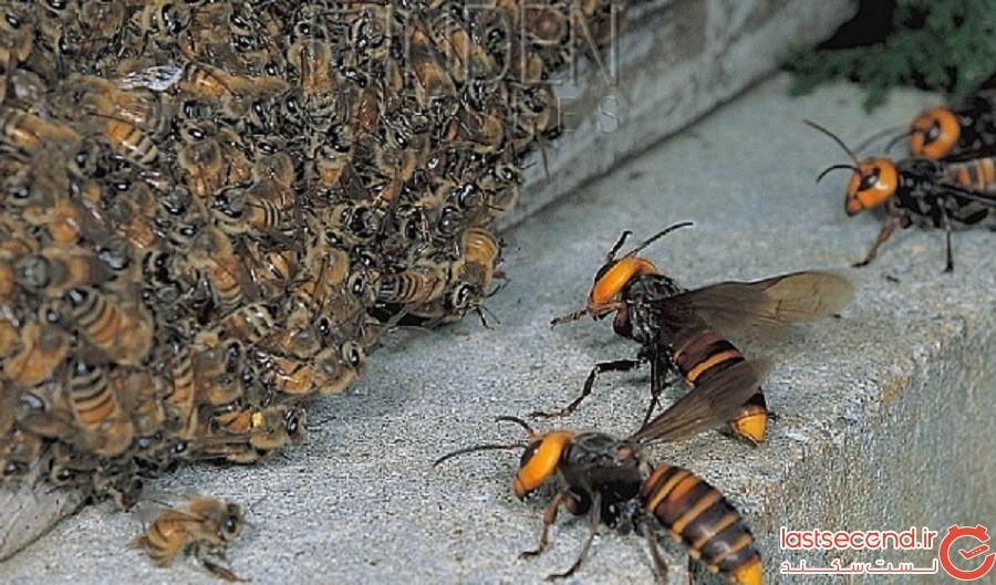 Huge-bee.jpg