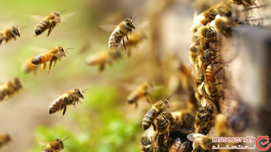 Emigration-of-bees.jpg