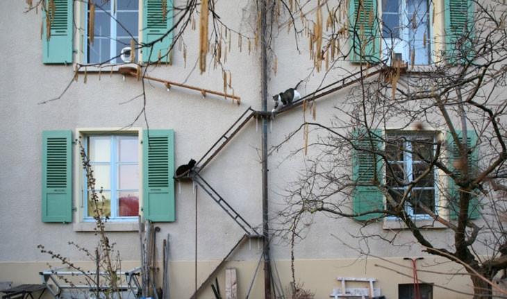 ساختمانهایی در سوئیس که مخصوص گربه ها طراحی شده اند
