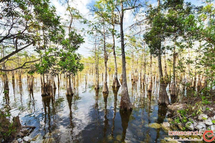 پارک ملی اِورگلیدس (Everglades) – ایالات متحده آمریکا