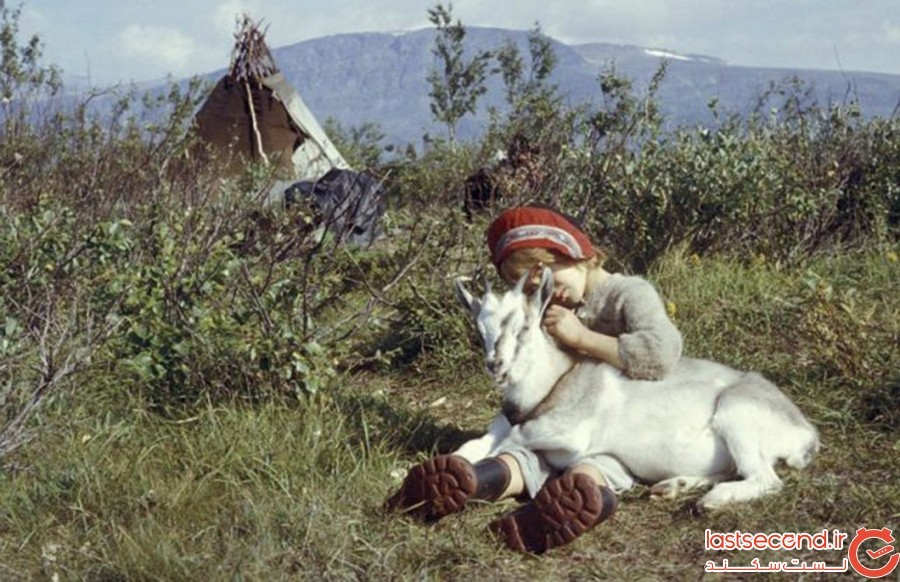 Girl-and-goat-at-a-Sámi-camp.jpg