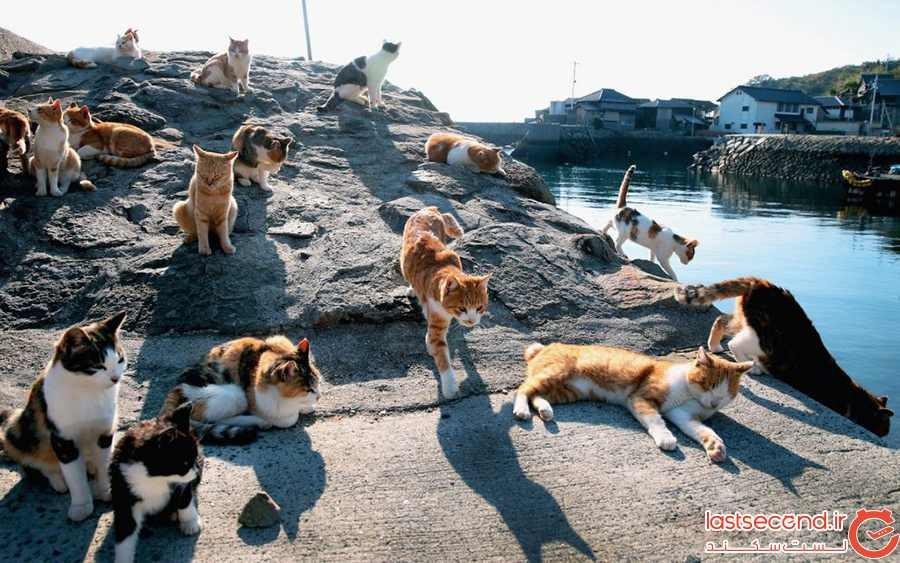 جزیرهی گربهها، ژاپن