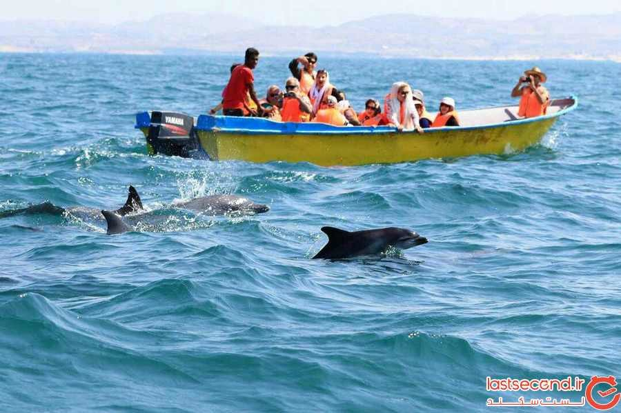 Wildlife-and-marine-life.jpg