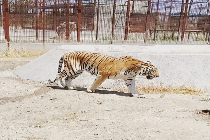 Safadasht Zoo (5).jpg