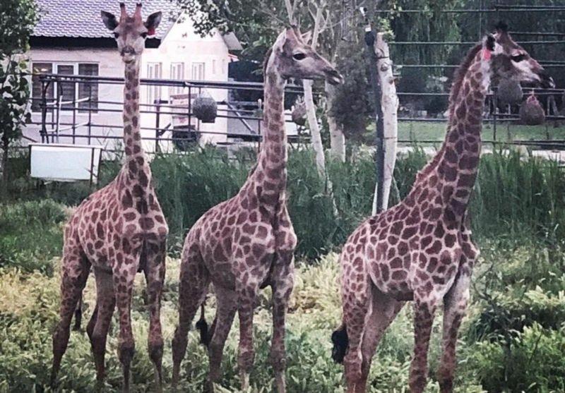 Safadasht Zoo (1).jpg