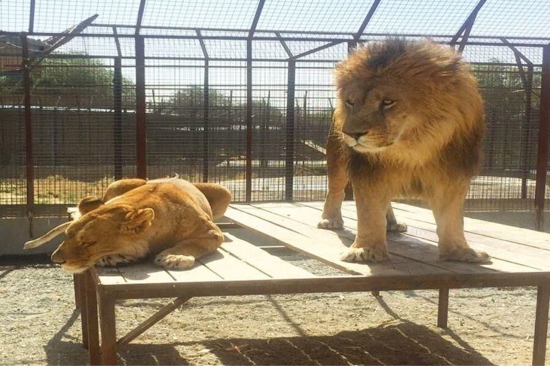 Safadasht Zoo