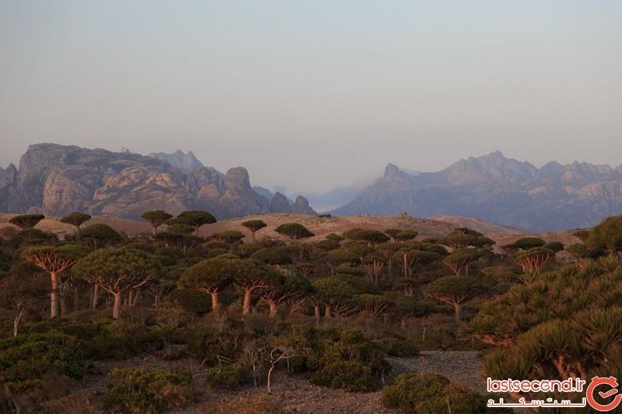 مجمعالجزایر Socotra