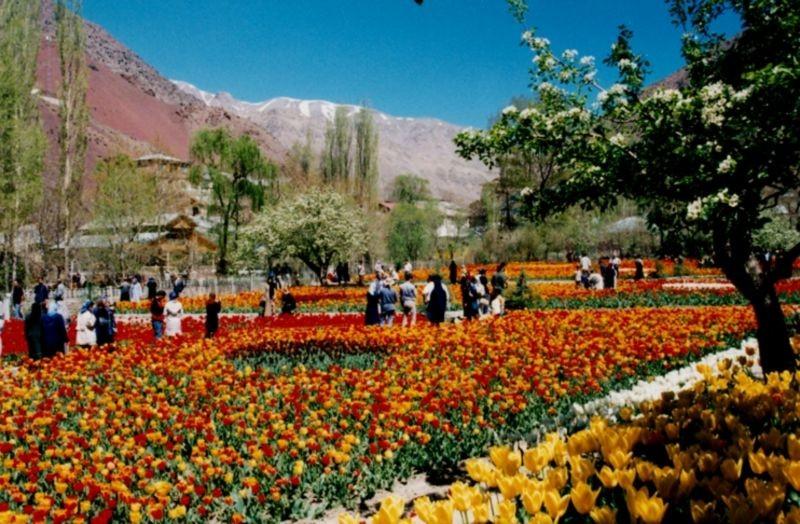Gachsar Tulips Garden (4).jpg