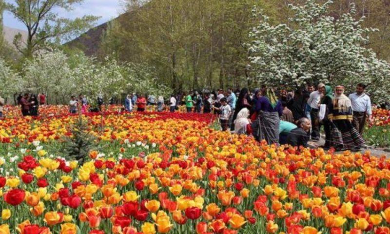 Gachsar Tulips Garden (1).jpg
