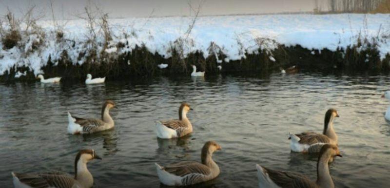 Gulamarz Lagoon (2).JPG