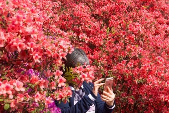 زیباییهای بیبدیل بهار در نقاط مختلف دنیا