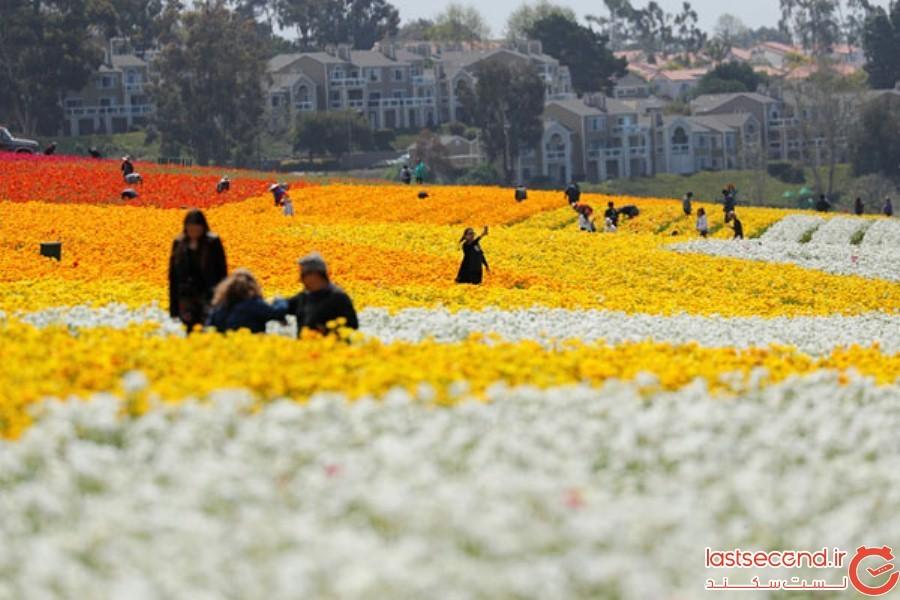 Spring-Is-onthe-Way-4.jpg