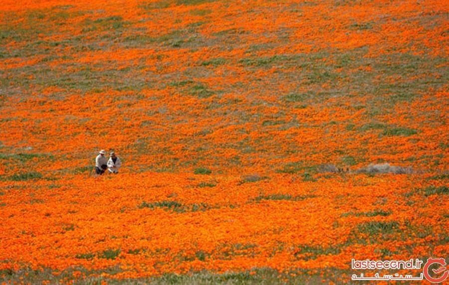 Spring-Is-onthe-Way-13.jpg
