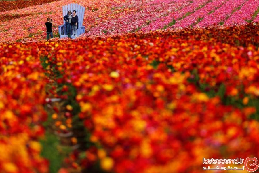 Spring-Is-onthe-Way-23.jpg