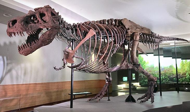 کشف بقایای بزرگترین دایناسور گوشتخوار دنیا