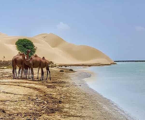 ساحل درک چابهار
