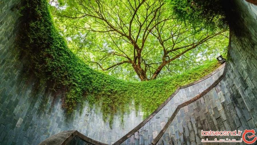 پله های زیبای سنگاپور