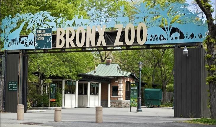 9 حقیقت درباره باغوحش برونکس