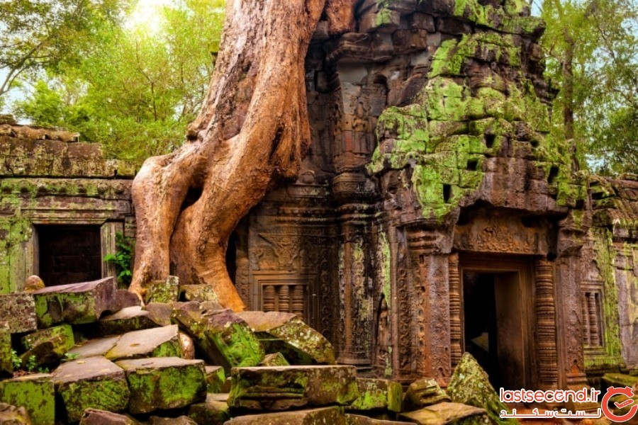 Ta Prohm (تا پروم)- کامبوج