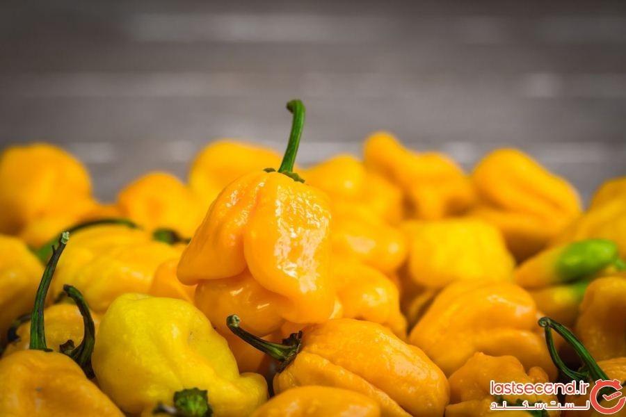 Yellow-spicy-naga-viper-chilis.jpg