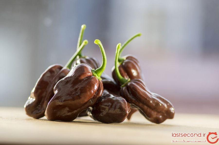 Chocolate-habanero-peppers.jpg