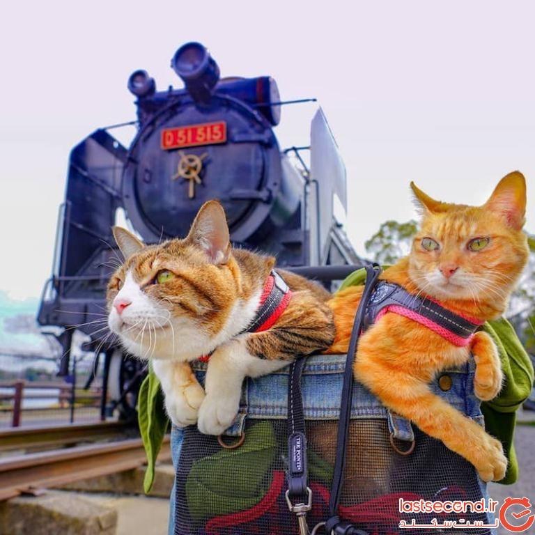 دو گربه ماجراجو، همراه صاحبشان، به سراسر ژاپن سفر میکنند