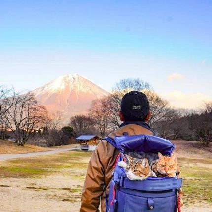 دو گربه ماجراجو که همراه صاحبشان، به سراسر ژاپن سفر کردهاند