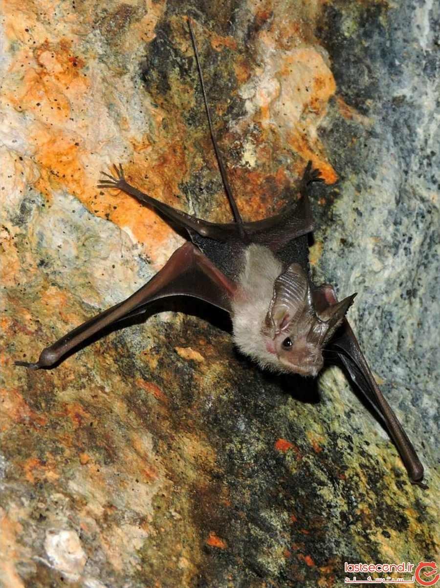غار خفاش دهلران