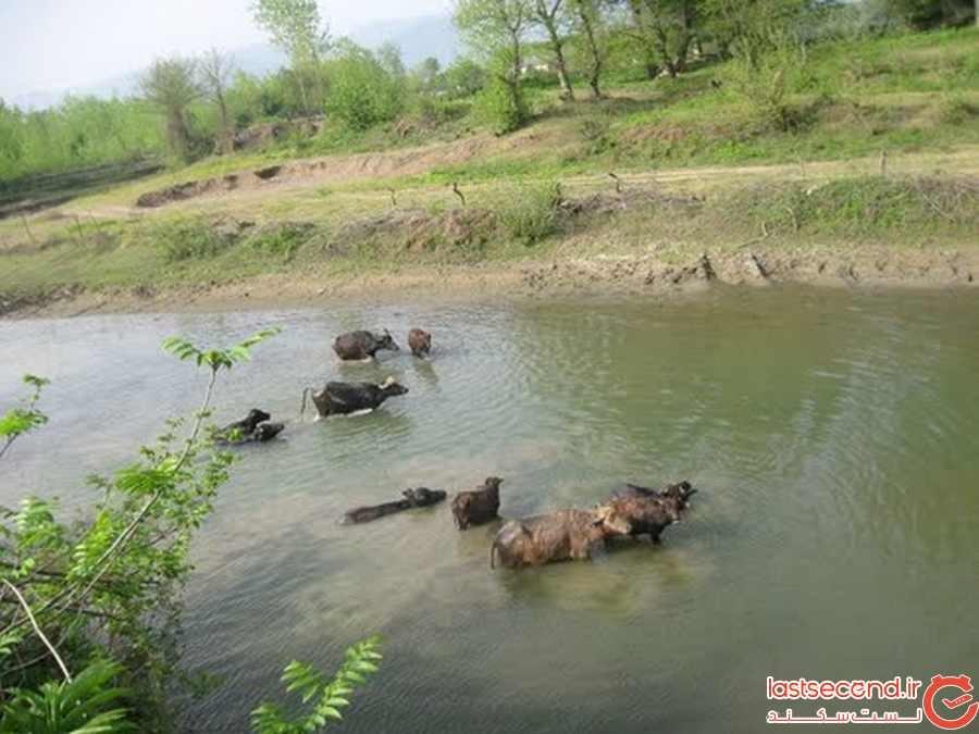 رودخانه دیناچال