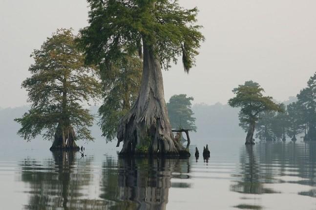 قدمت این درخت عجیب به قبل از میلاد مسیح برمیگردد!