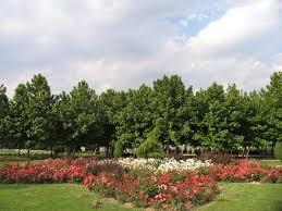 پارک نرگس