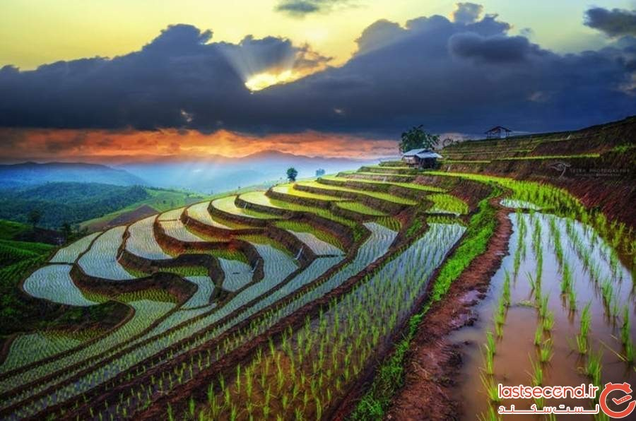 زمینهای شالیکاری طبقاتی - ویتنام