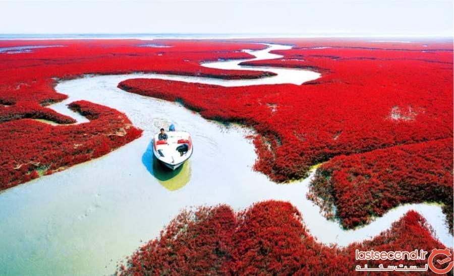 ساحل سرخ پانجین - چین