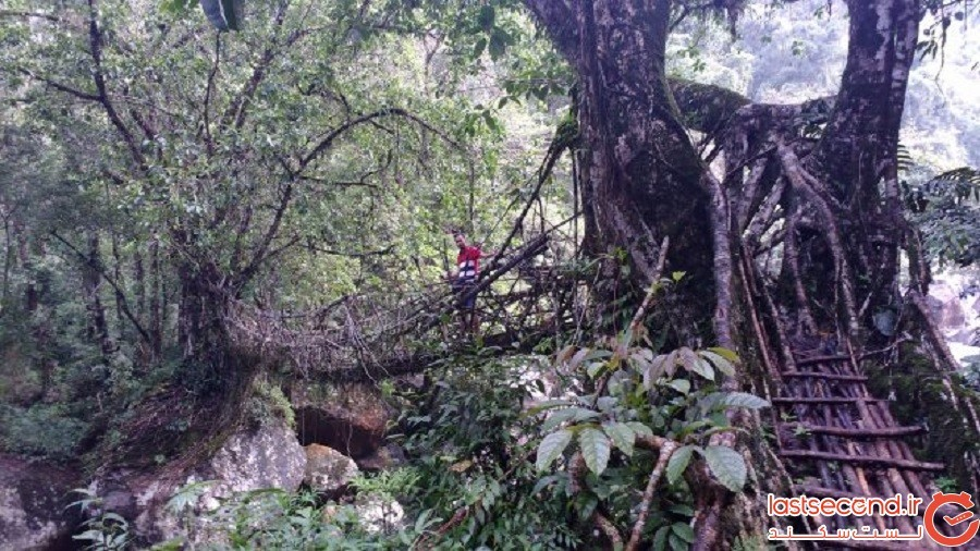 پلهایی از جنس ریشه (چرااوپونجی، هند)