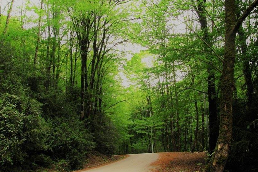 Babolkenar Forest Park (1).jpg