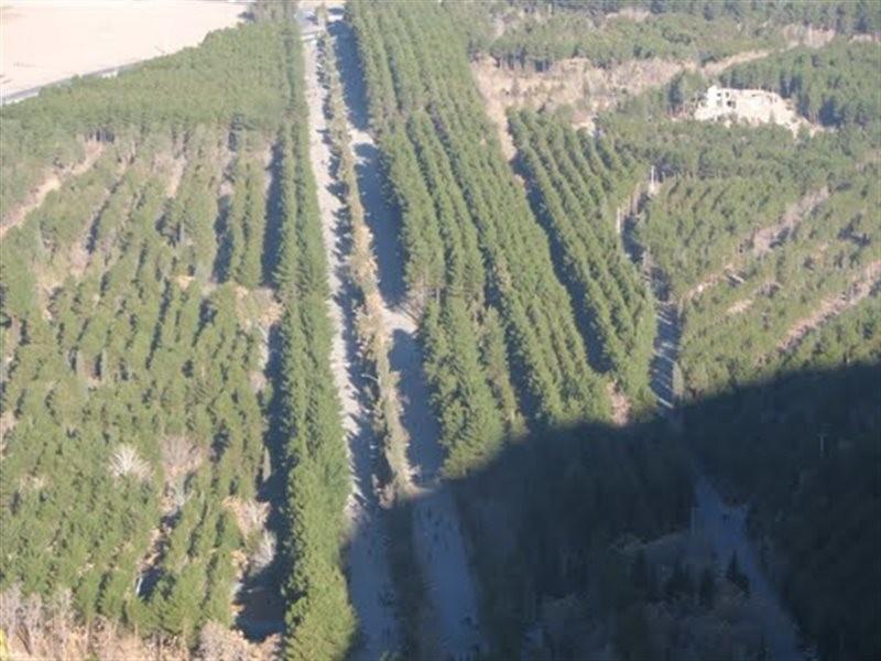 Bahonar Forest Park (4).jpg