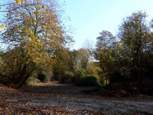 Babolkenar Forest Park (5).jpg