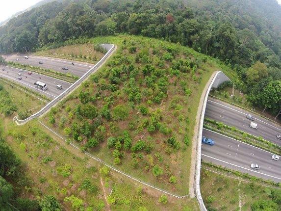 پل های عجیبی که برای حفاظت از حیوانات ساخته شده است