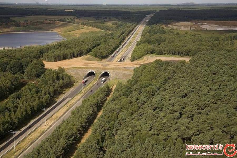 25 پل مخصوص حیوانات، که آنها را از شر انسانها و ماشینهای آنها، در امان نگه میدارند