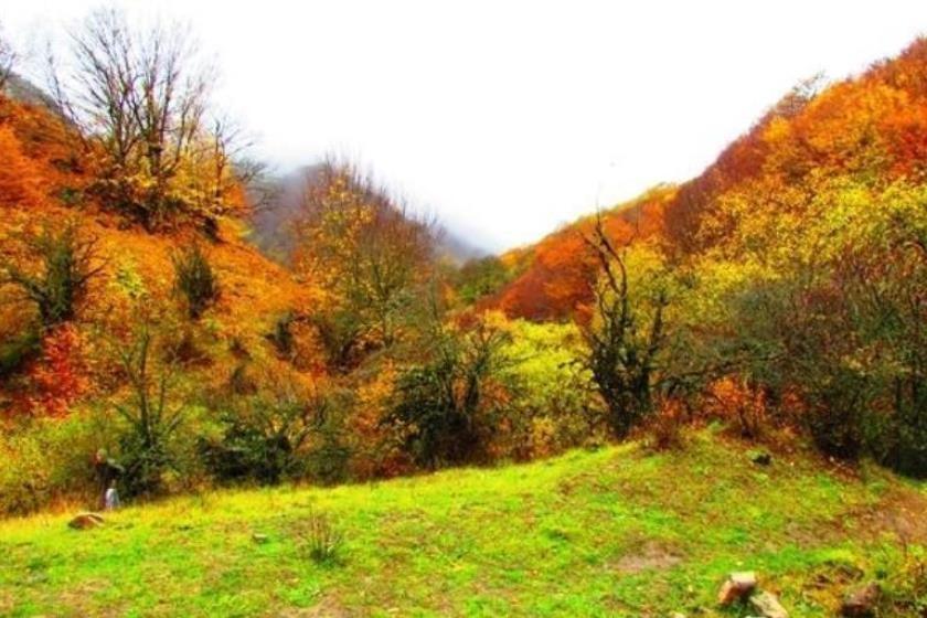 Tuskestan Forest (4).jpg